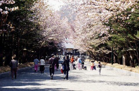北海道神宮の花見の服装